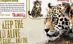 National wildlife federation adoption catalog